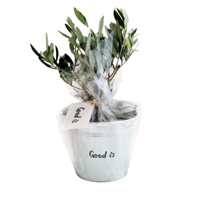 plante publicitaire Olivier pot zinc Ø 15 cm