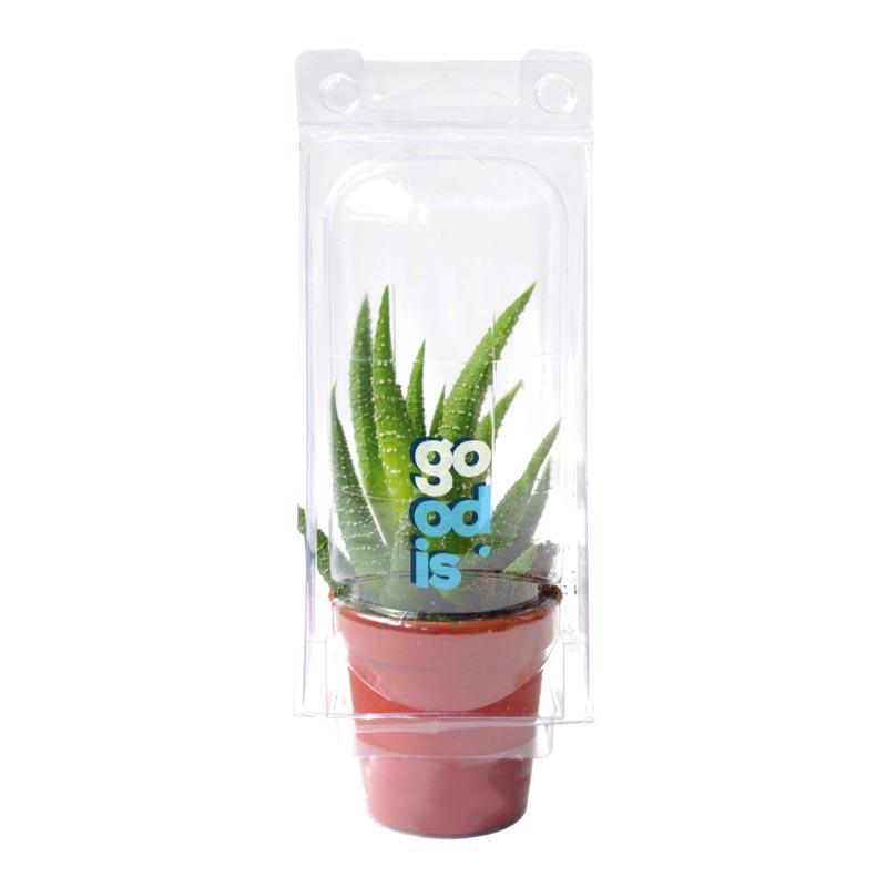 Mini serre 1 pot cactus ou succulente - plante personnalisée