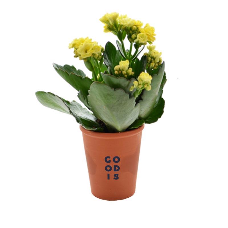 Mini plante personnalisable dépolluante