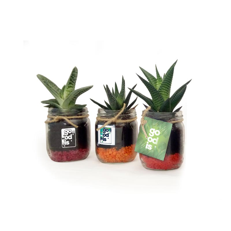Plante dépolluante en bocal