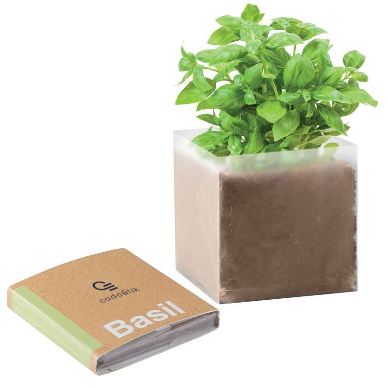 Pot à graines publicitaires substrat basilic basil - goodies plante