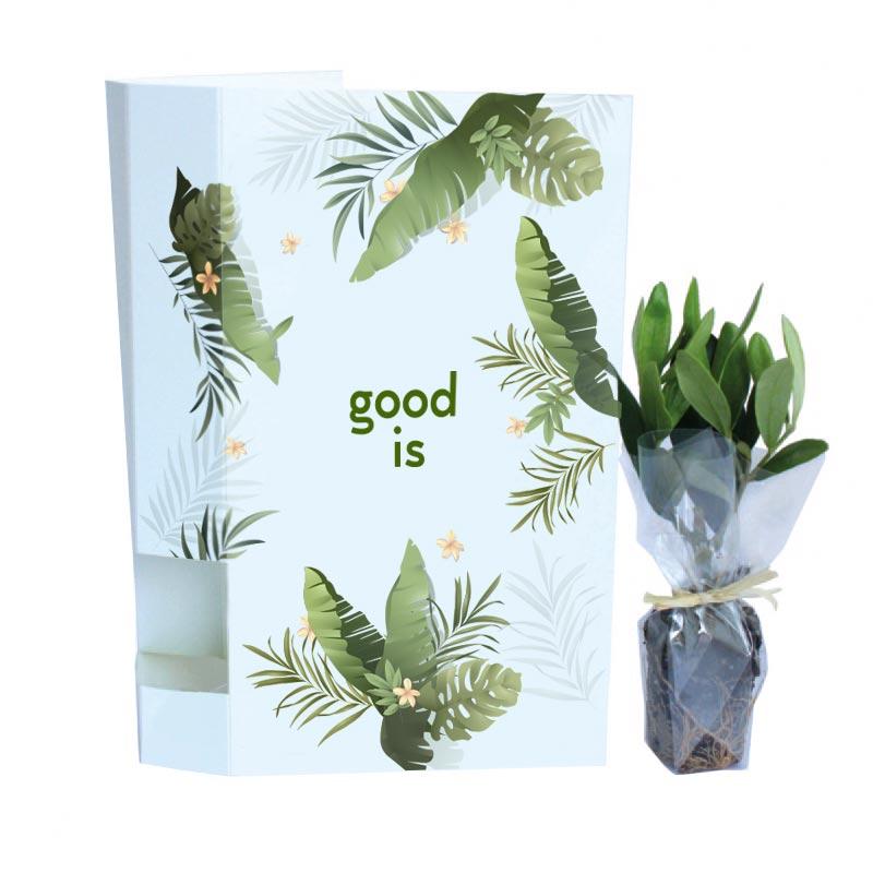 Plante personnalisable - Plante Postale - Bambou,Olivier, Eucalyptus