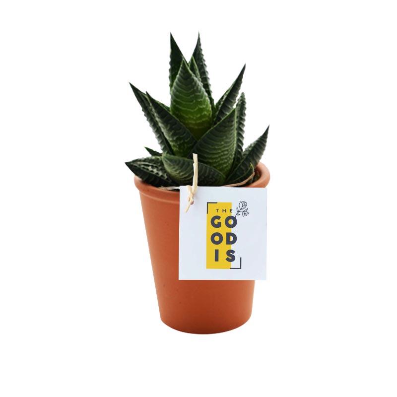 Mini plante publicitaire dépolluante avec pot en terre cuite de 7 cm