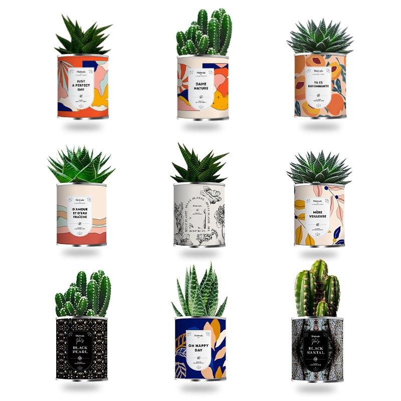 Plante personnalisable assainissante en pot - Motifs disponibles