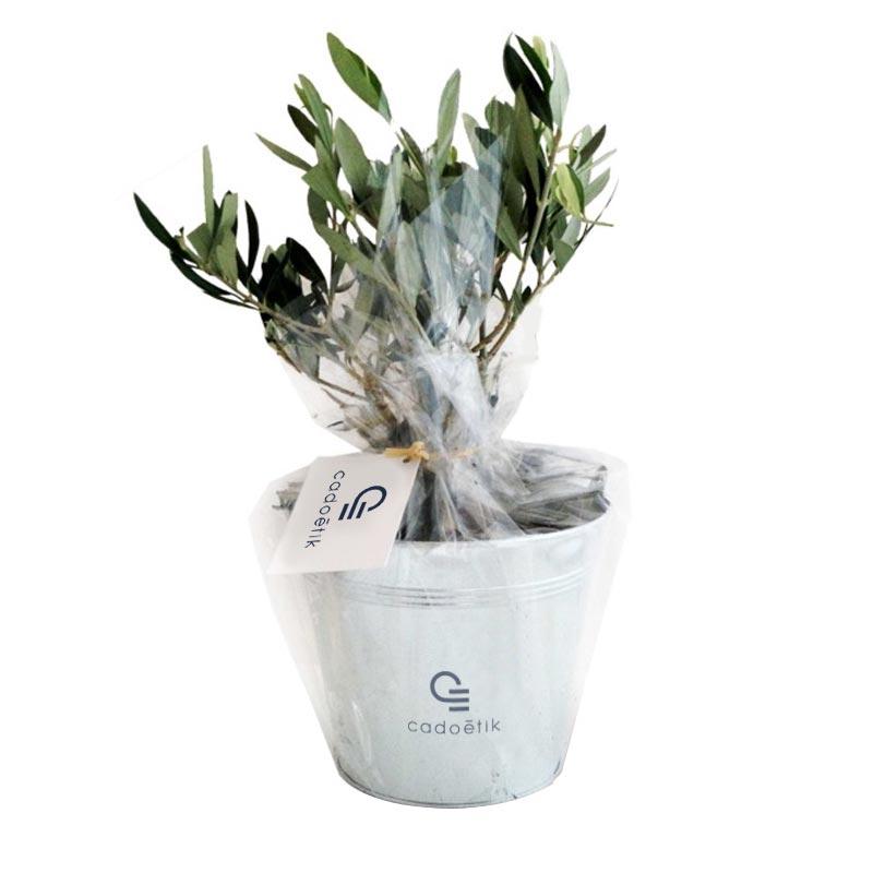 Cadeau d'entreprise écologique - Plant Olivier pot osier ou zin
