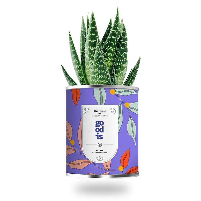Mini plante publicitaire assainissante en pot - Cadeau d'entreprise écologique