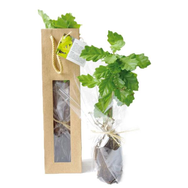 Plant d'arbre publicitaire feuillu en sac kraft fenêtre - Objet pub végétal
