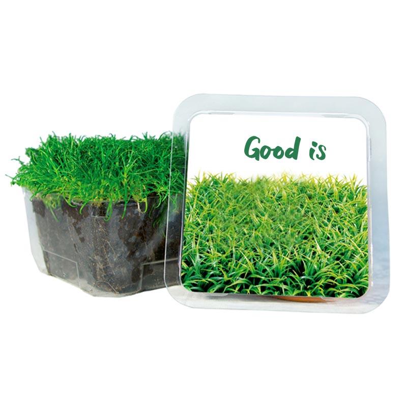 Petit Cube Vert - kit de plantation publicitaire
