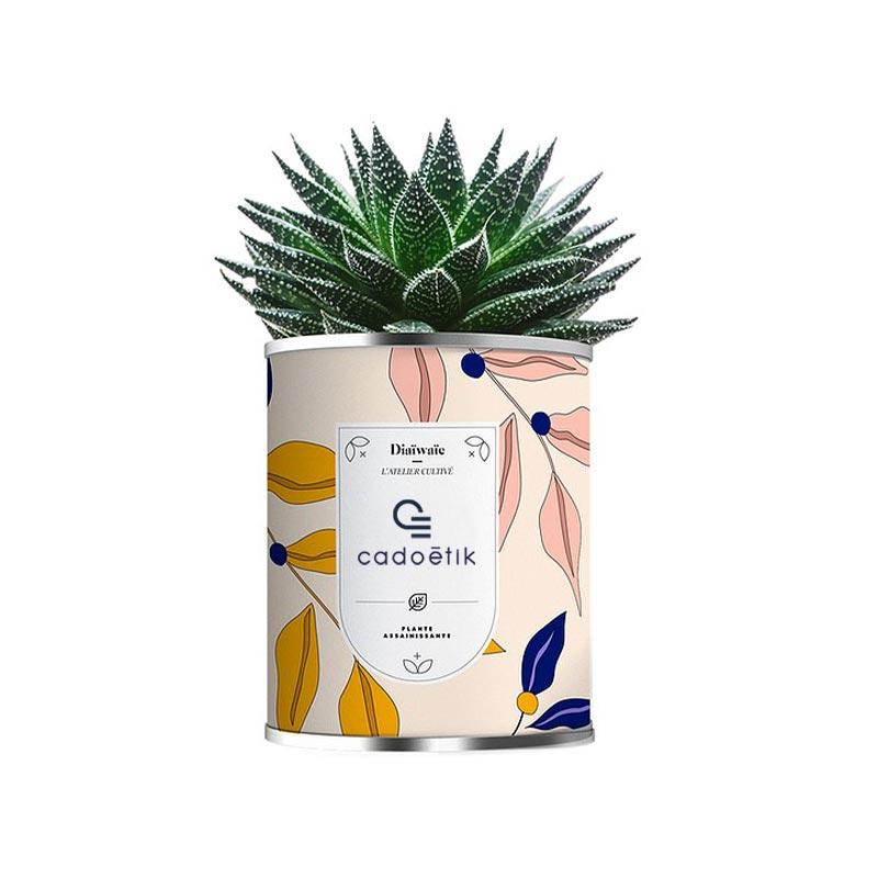 Mini plante publicitaire assainissante en pot