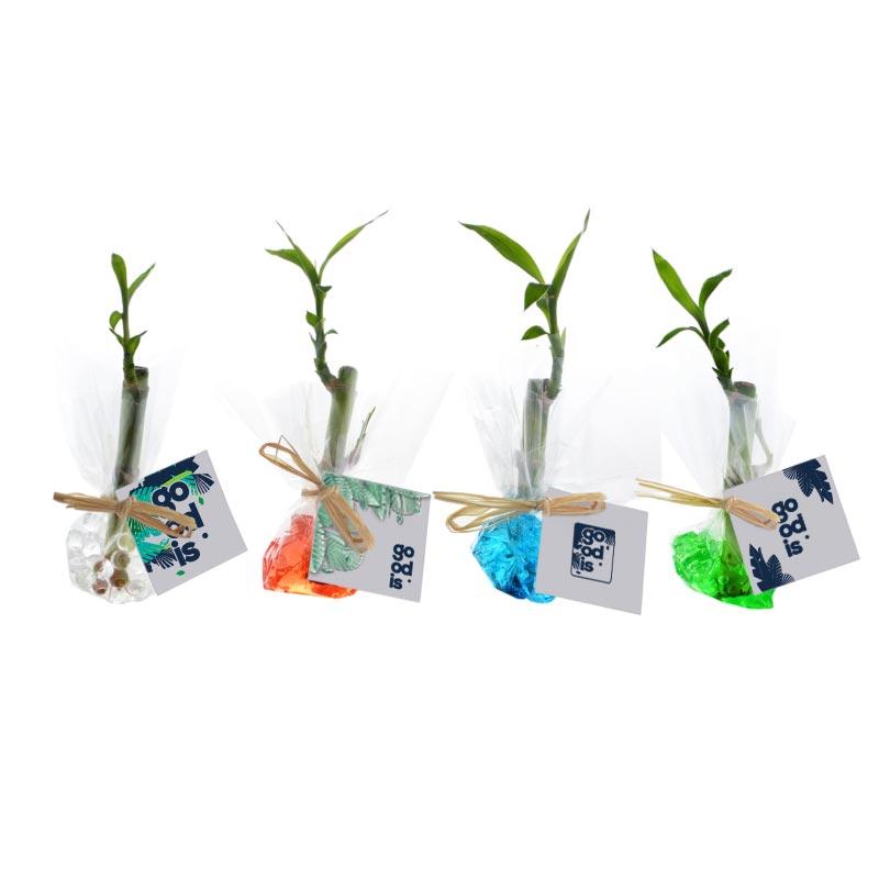 Bambou d'eau en papier fleuriste