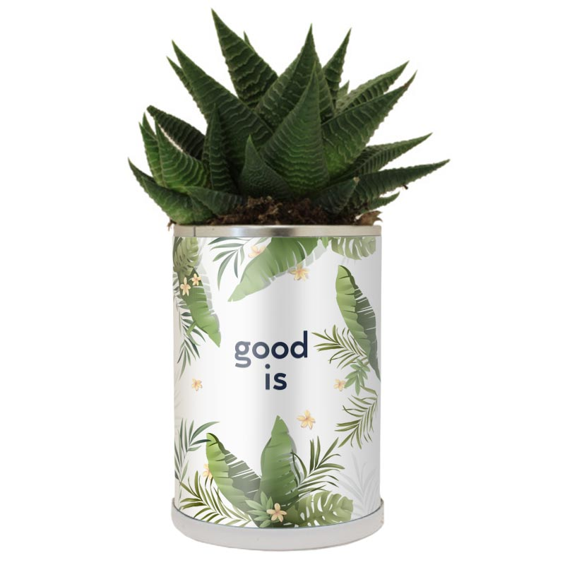 Goodies cactus - Canette à plante Cactus