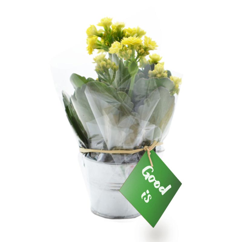 Plante publicitaire fleurie dans un pot en zinc