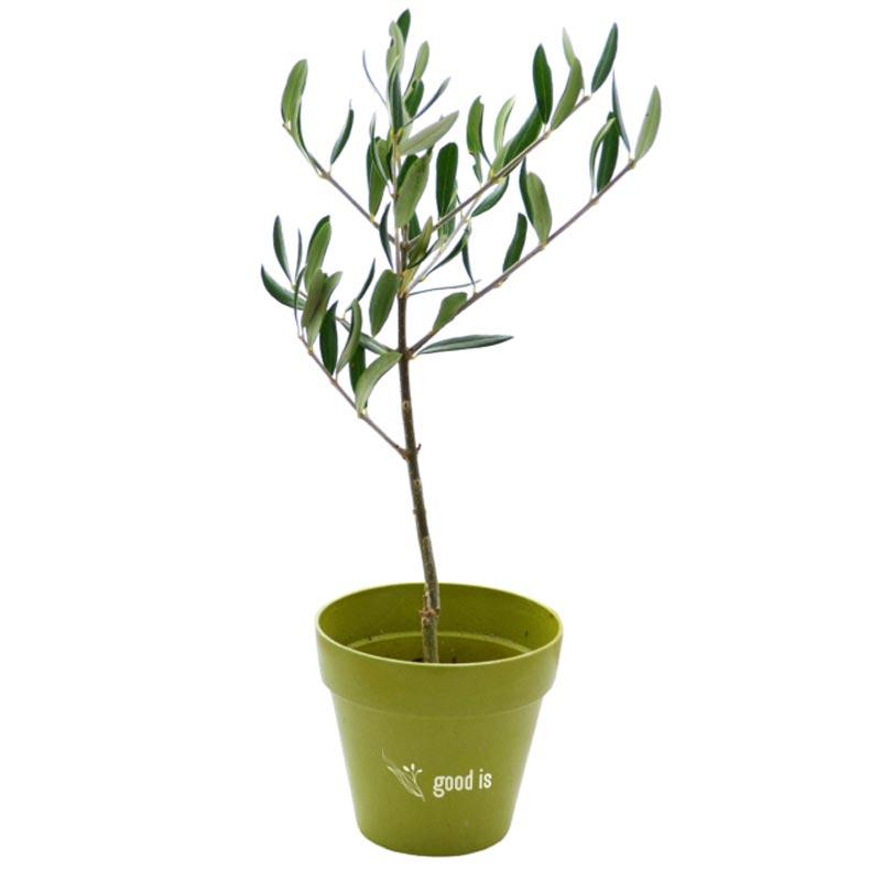 Plant d'arbre publicitaire avec pot en fibre de bambou