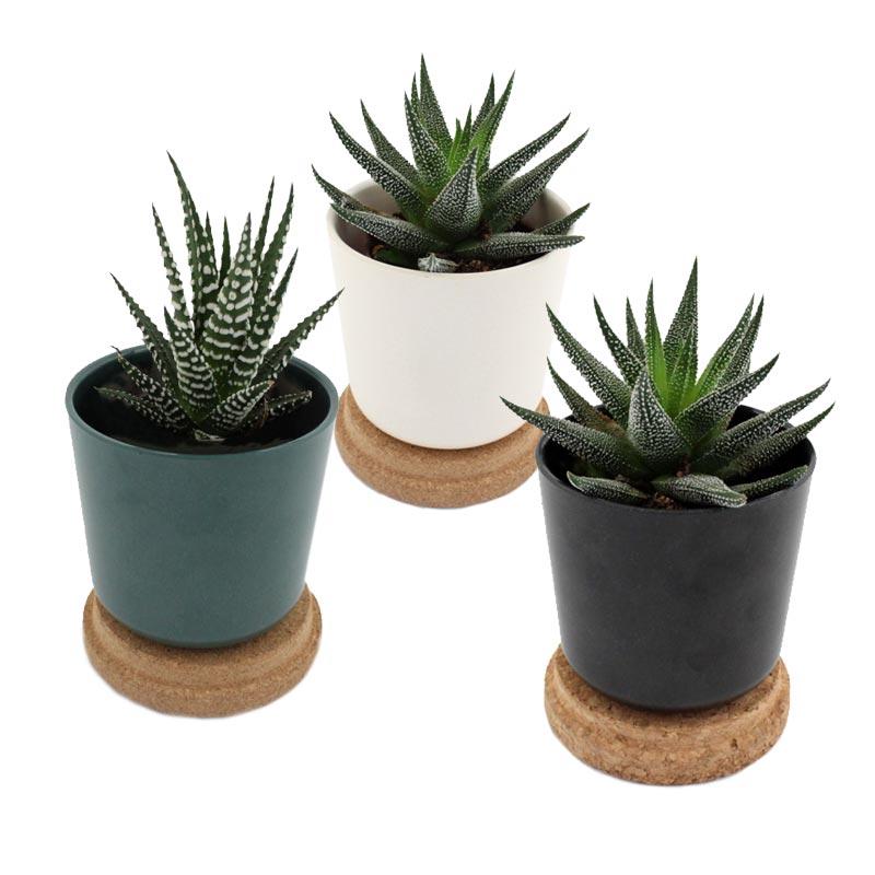 Mini plante dépolluante publicitaire en pot en bambou et couvercle en liège - Coloris disponibles