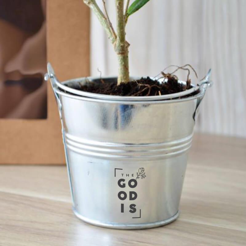 Plant arbre en sac kraft fenêtre Prestige - Cadeau d'entreprise végétal