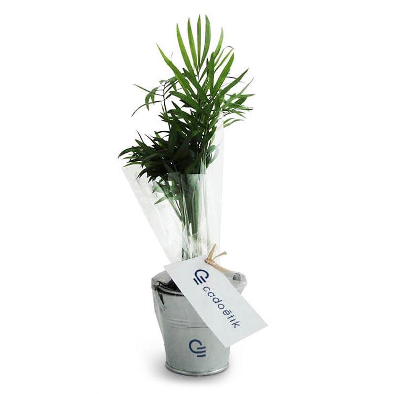 Goodies écologique - Plant arbre en pot zinc - Prestige: Olivier, Sequoia, Palmier