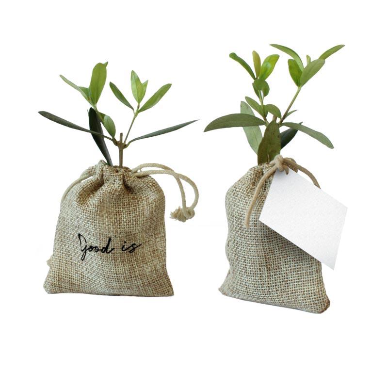 Mini plant d'olivier en pochon