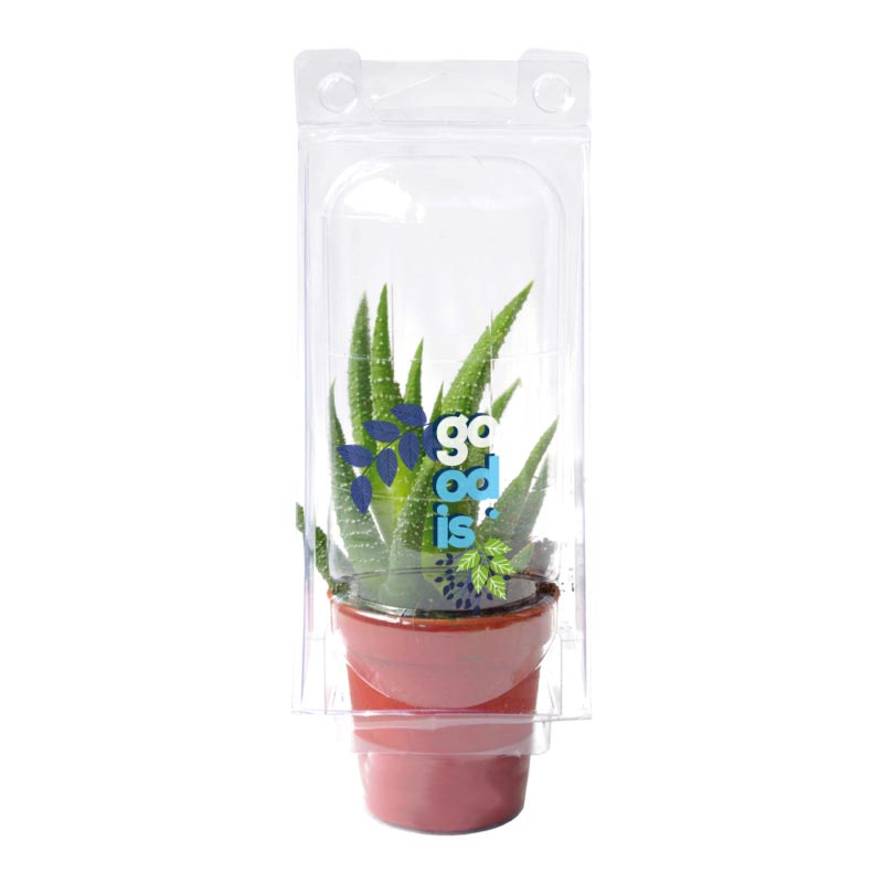 Mini serre 1 pot cactus ou succulente - plante personnalisable
