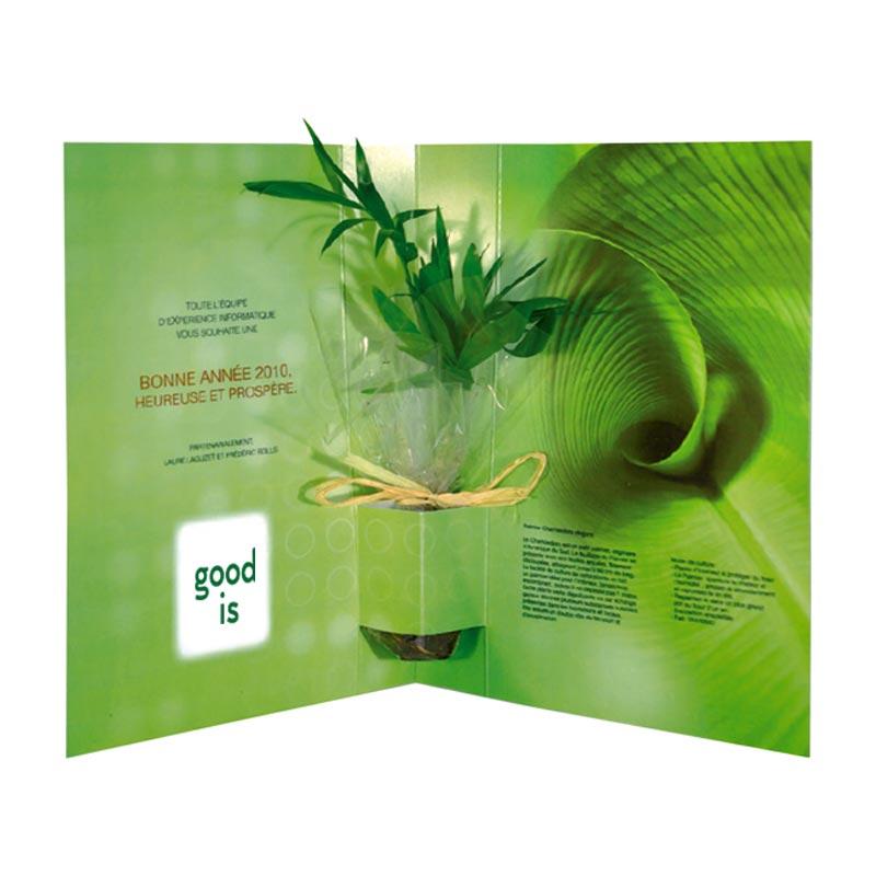 Goodies plante - La plante postale Bambou,Olivier, Eucalyptus
