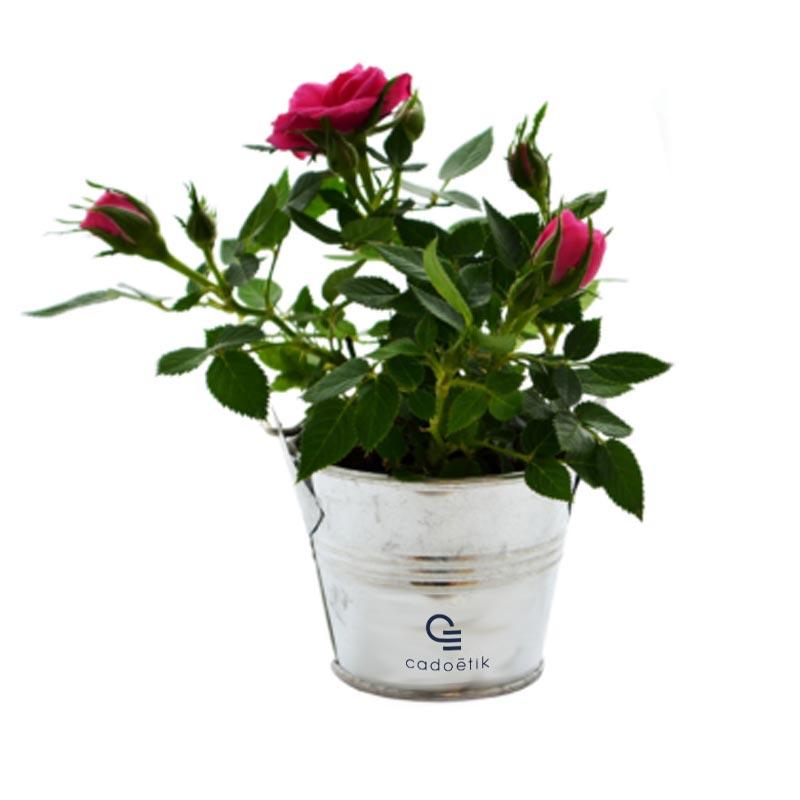Cadeau publicitaire végétal - Mini plante fleurie en pot zinc 6 cm