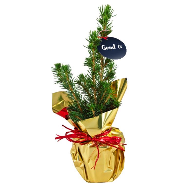 Plante publicitaire sapin de Noël en pot