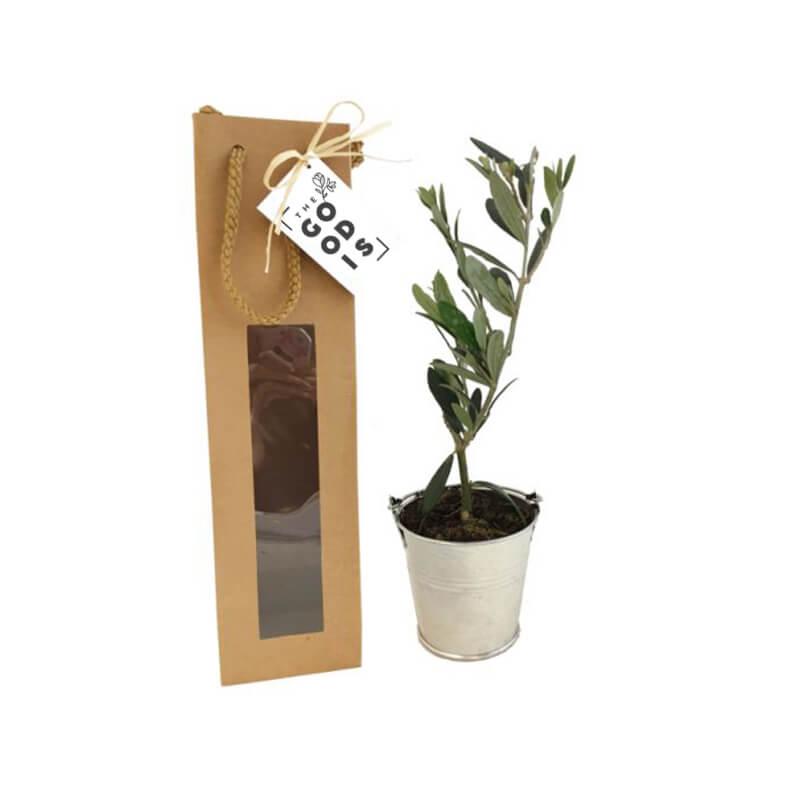 Plant arbre en sac kraft fenêtre Prestige - Cadeau entreprise séminaire