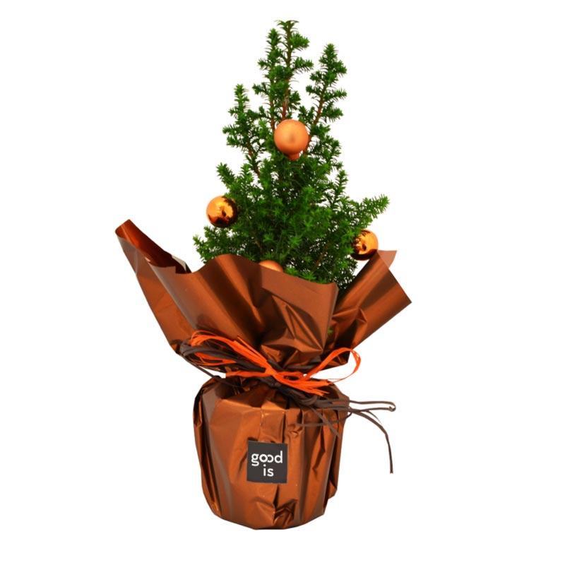 Plant d'arbre publicitaire mini sapin de Noël