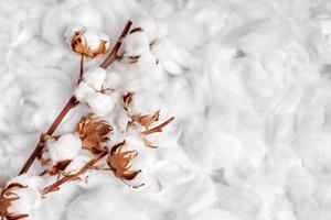 matière coton cadoetik