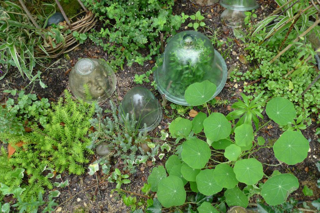Certaines plantes et petites sculptures sont sous cloches transparentes