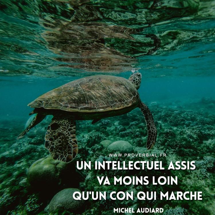 Un intellectuel assis va moins loin qu'un con qui marche.
