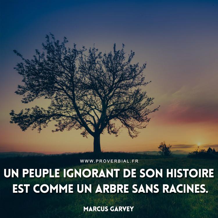 Un peuple ignorant de son histoire est comme un arbre sans racines.