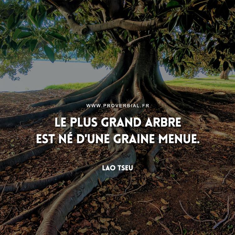 Le plus grand arbre est né d'une graine menue.