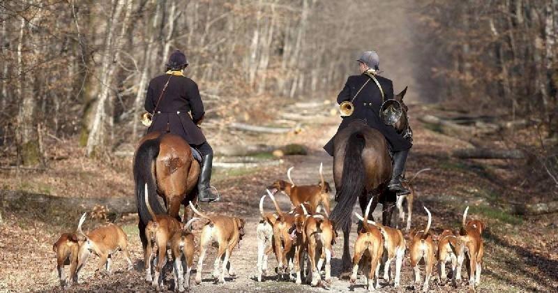 Une cagnotte en ligne pour le militant anti-chasse blessé en forêt du Gâvre