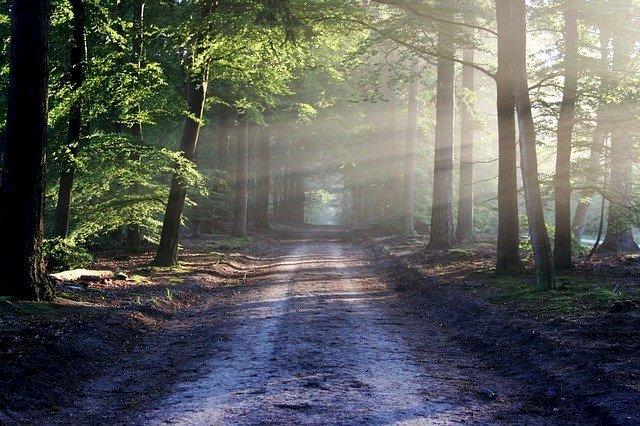 Assistez au lever de soleil en musique avec Eric Truffaz en forêt du Gâvre !