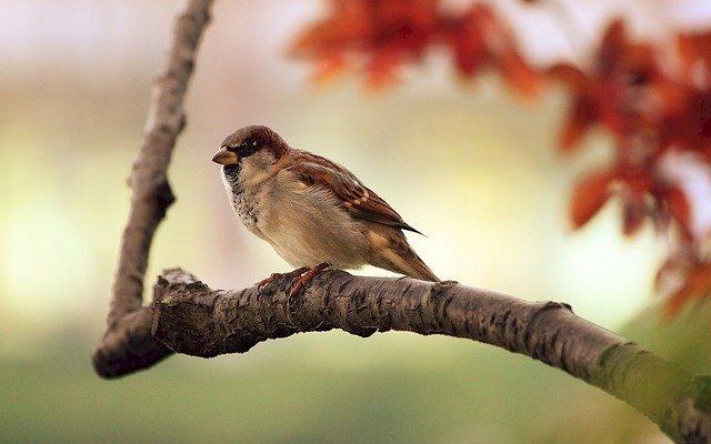 Partez pour une balade à la découverte des oiseaux