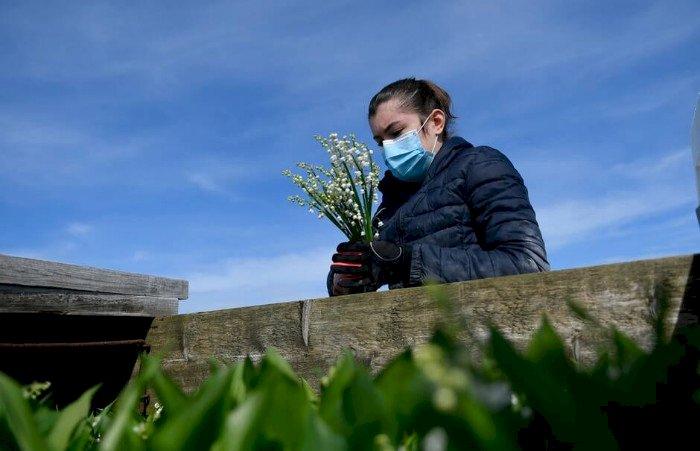 Vente du muguet le 1er mai : chez les fleuristes en drive, mais pas à la sauvette