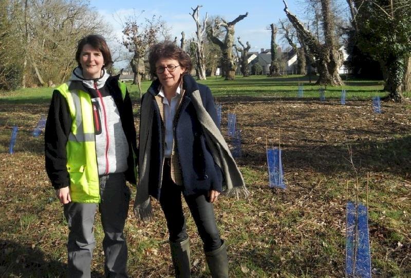 Près de Nantes, 178 arbres replantés pour redonner vie à un parc public