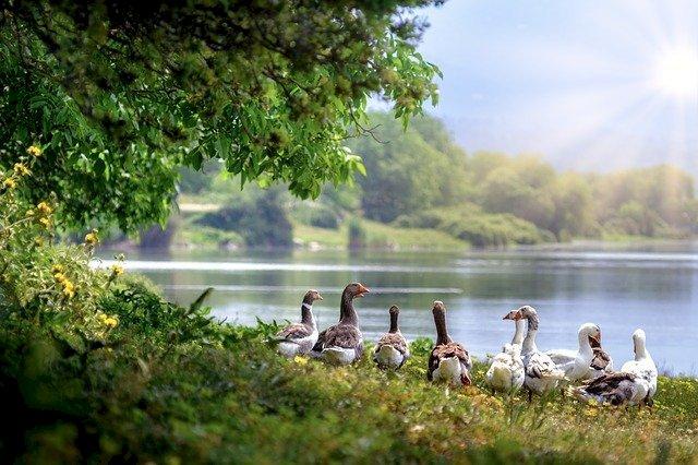 Les Offices de Tourisme Erdre Canal Forêt fermés