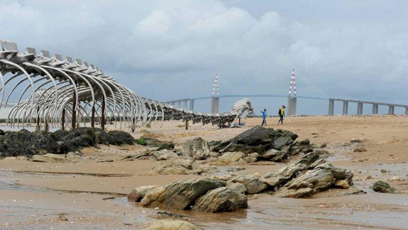 Loire-Atlantique. Du Serpent d'océan aux manchots du Cap, des idées de sorties insolites | Presse Océan