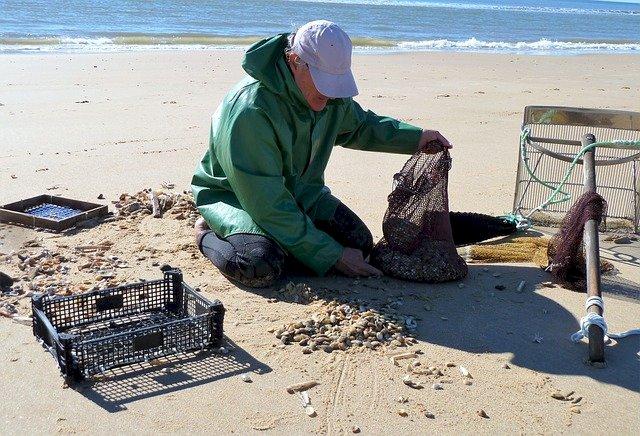 Pêche à pied de loisir : Levée de l'interdiction