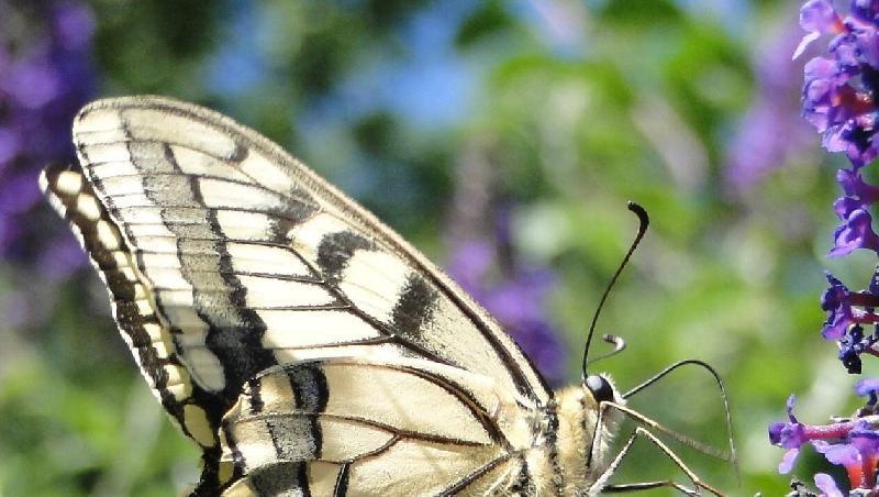 Le Gâvre. Une sortie à la découverte des papillons de la forêt