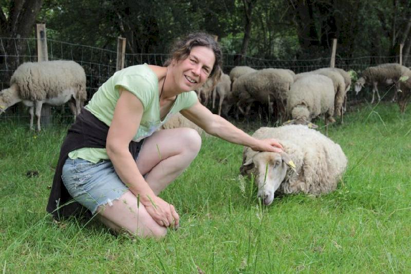 """VIDÉO. Inédit à Blain : une fête de la laine """"à la ferme"""" le 30 juin"""