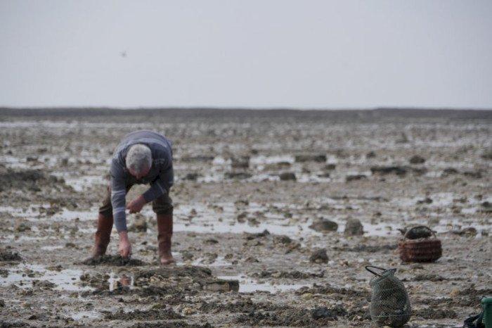 La pêche à pied des coquillages interdite d'Assérac à Saint-Michel-chef-Chef