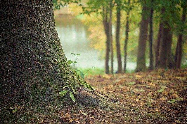 Les plus belles forêts des Pays de La loire