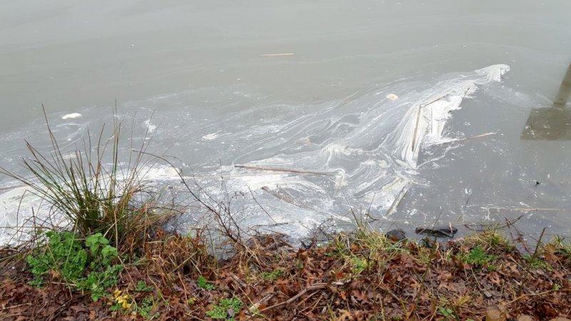 Pollution de l'étang à Blain : les résultats sont connus