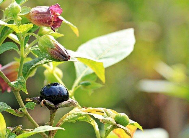 Information sur les végétaux à risque pour la santé