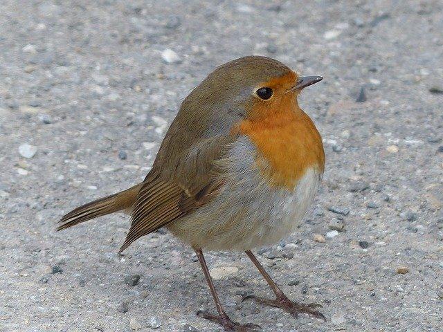 Samedi 30 et dimanche 31 janvier 2020, rendez-vous pour participer au recensement des oiseaux.