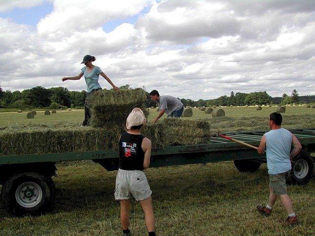 Les Pays de la Loire ont perdu plus de 5 000 agriculteurs