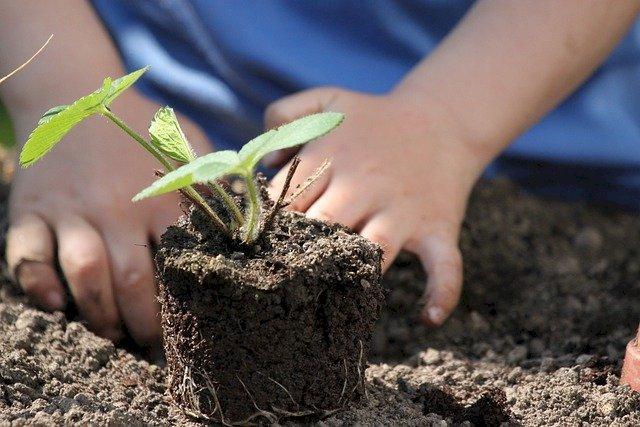 Jardinage au naturel : trois aides à votre disposition