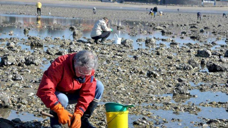 Loire-Atlantique. Levée partielle des interdictions de pêche à pied des coquillages | Presse Océan
